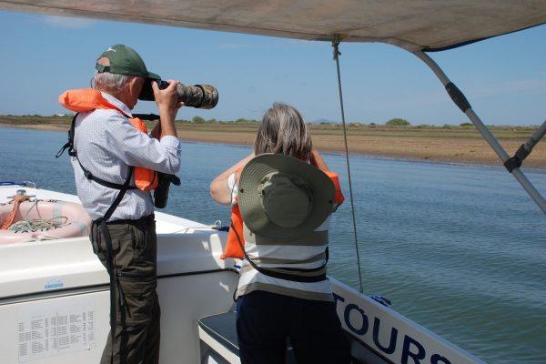 Boat tour Ria Formosa Birdwatching