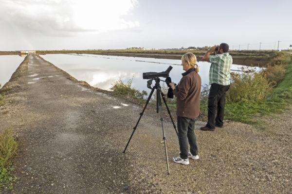 self-guided birding Ria Formosa